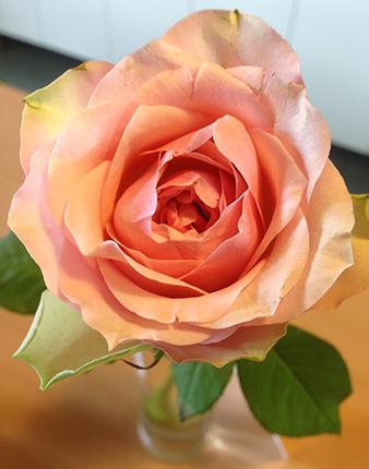 Ros ljusrosa