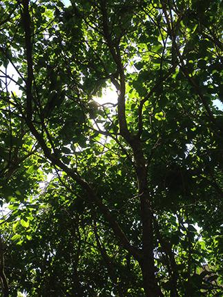 Solen mellan grenarna 1