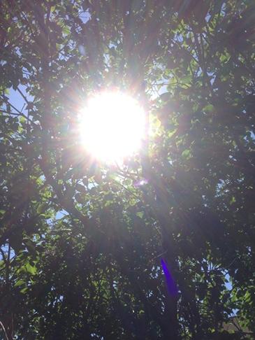 Solen mellan grenarna 2