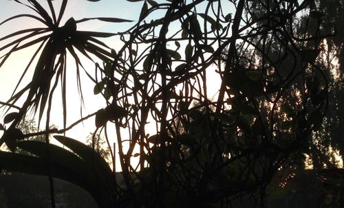 Växter i mitt vardagsrumsfönster