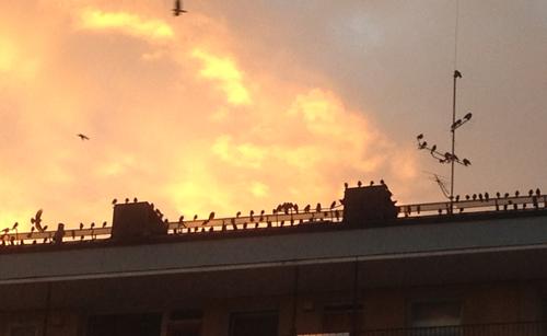 Fåglar mot kvällshimmel