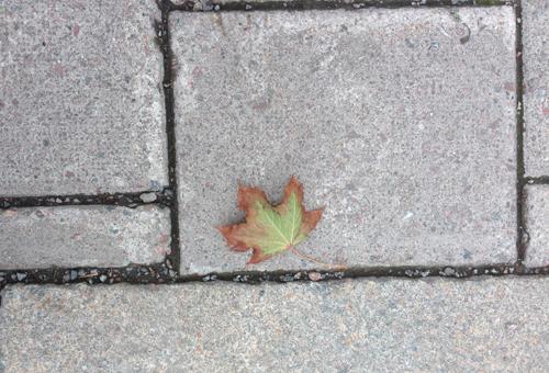 Lönnlöv på trottoaren