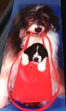 Hund med valp i väska