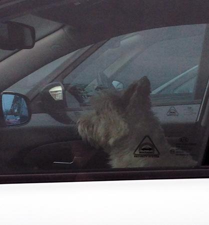 Hunden i bilen bredvid
