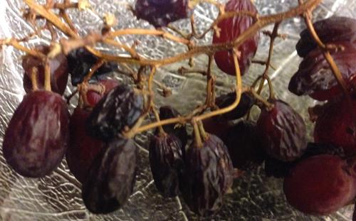 Torkade druvor