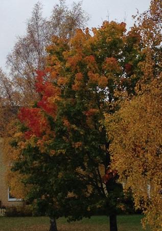 Höstträd i flera färger