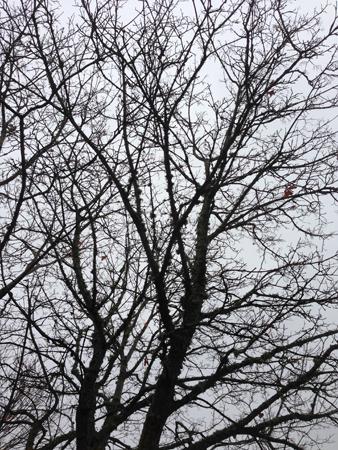 Kala trädgrenar mot grå himmel
