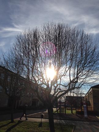 Sol i ett träd