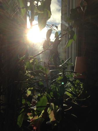 Solen genom köksfönstret