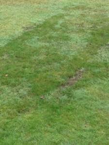 Spår i gräsmattan
