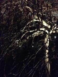 Träd mot kvällshimmel