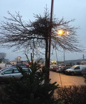 Fågelbo i litet träd