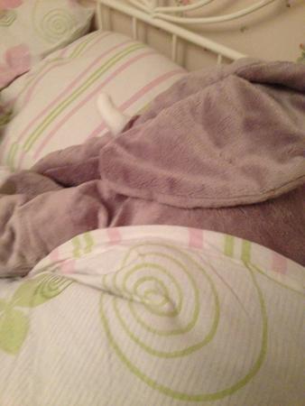 Elefanten i min säng