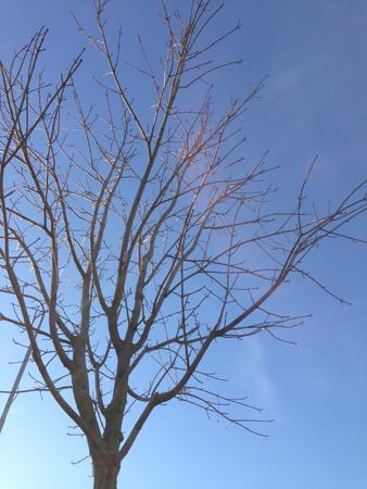 Lövfritt träd mot blå himmel