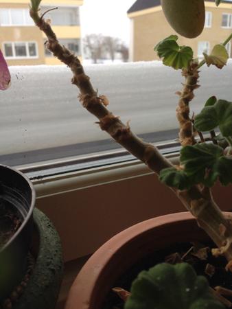 Snö på fönsterblecket utanför köket