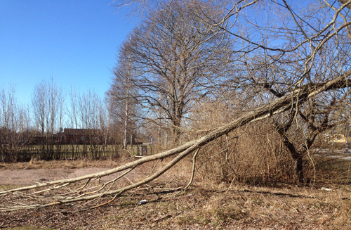 En stor trädgren som har gått av