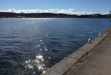 Solglitter i sjön