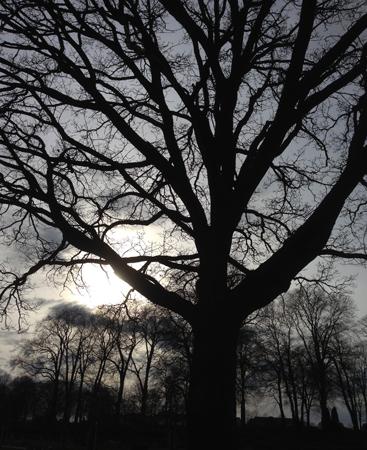 Träd på kyrkogården