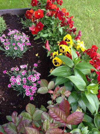 Blommor i Slottsträdgården