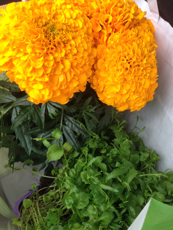 Orange stor tagetes