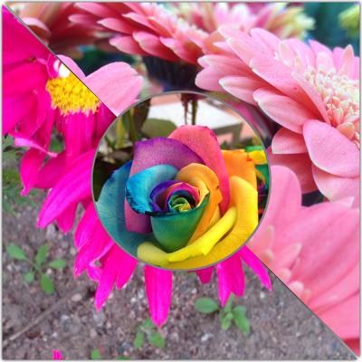 Fotokollage blommor