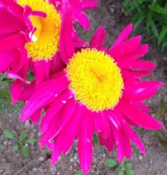 Röda blommor nära