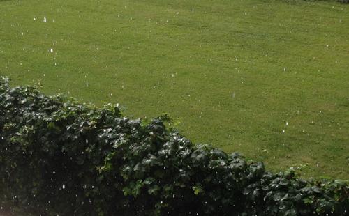 Regn på grannens häck