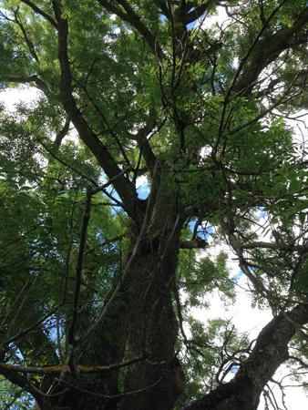 Under ett träd