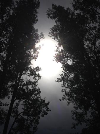 Sol och moln mellan träd