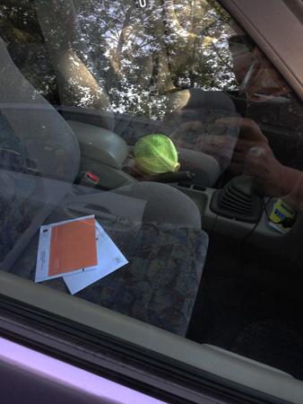 Kålhuvud i bilen