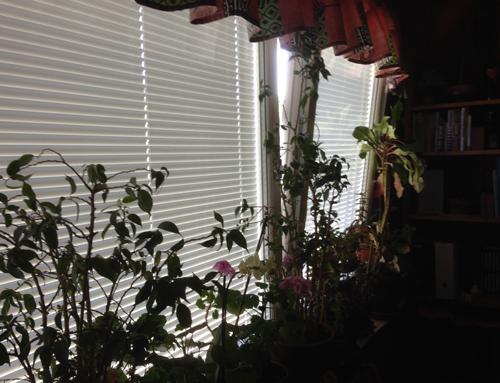 Köksfönster vippöppet