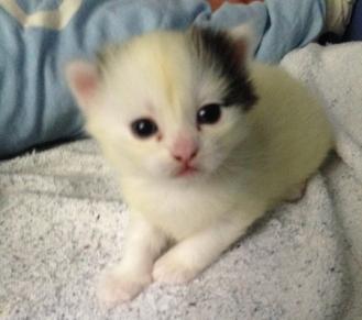 Den svarta, gula och vita kattungen är mest nyfiken.