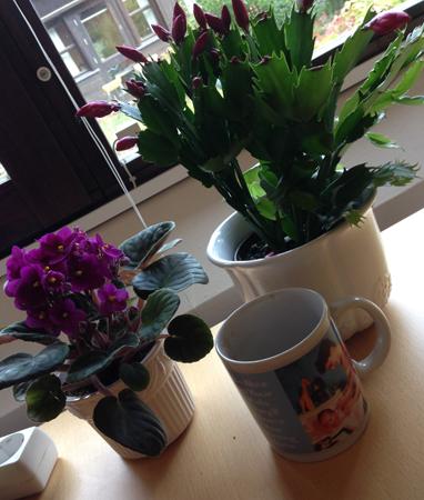 Färgglada växter och mugg på kontoret