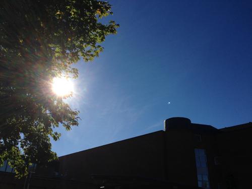 Sol träd blå himmel hustak