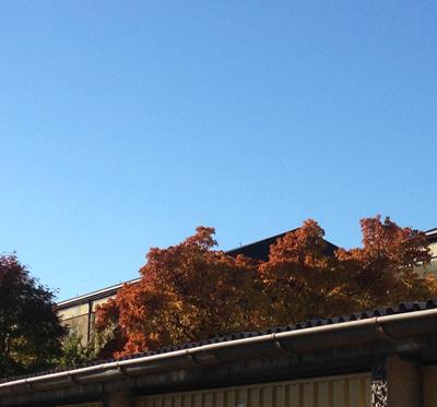 Blå himmel höstträd garage