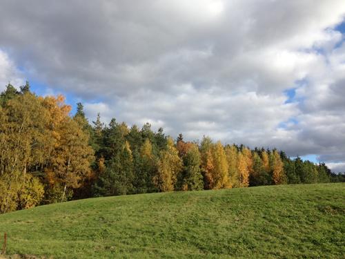 Träd och gräskulle med moln på himlen