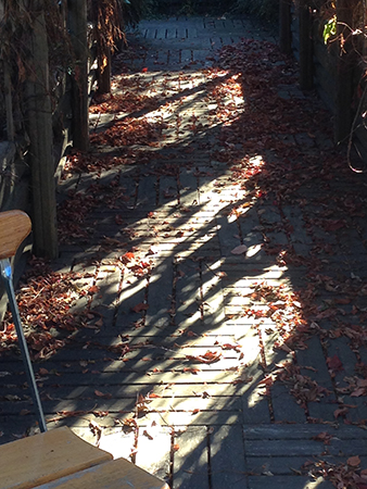 Pergola höst med stol i förgrunden