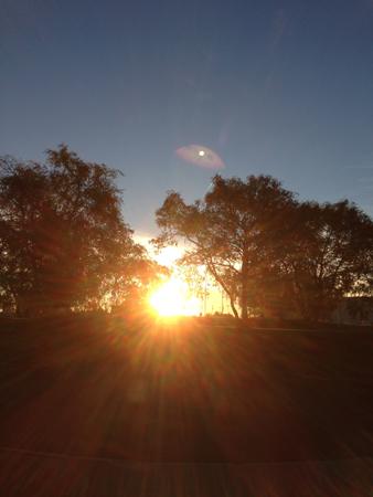 Soluppgång i oktober mellan träden