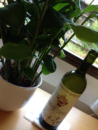 Växt o vinflaska