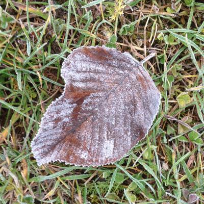 Frostigt löv