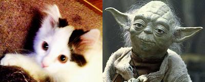 Citrus och Yoda
