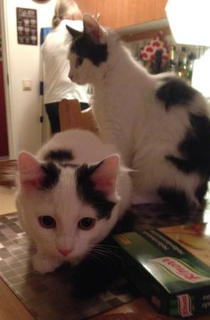 Annas rygg och kattungarna