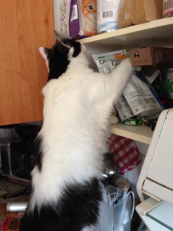 Lucifer i köksskåpet