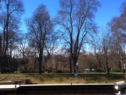 Träd i Stadsträdgården sedda över Fyrisån