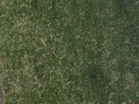 Snö eller hagel mot gräs