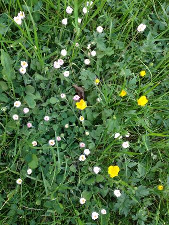 Gräs och små blommor