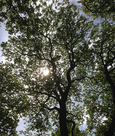 Solen genom trädkrona